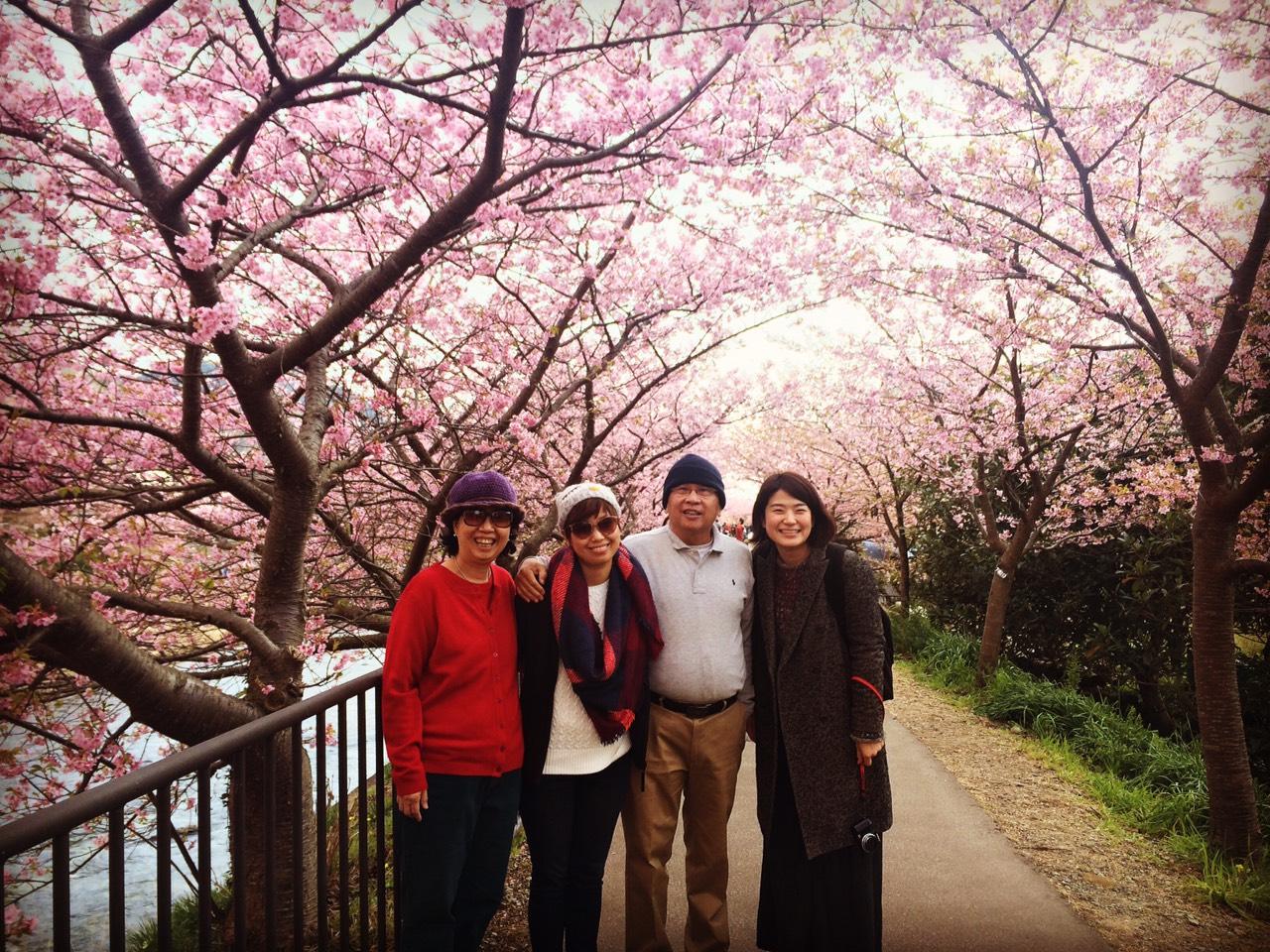 2_ミャンマー河津桜